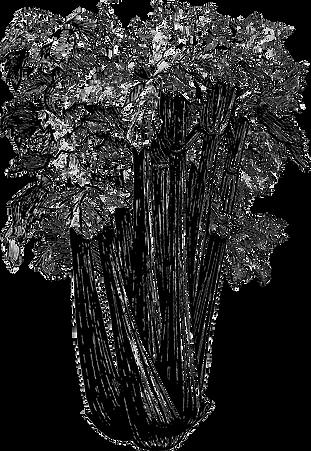 Celeri Vectotransp.png