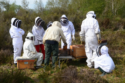 Chambord abeille noire2663 red.jpg
