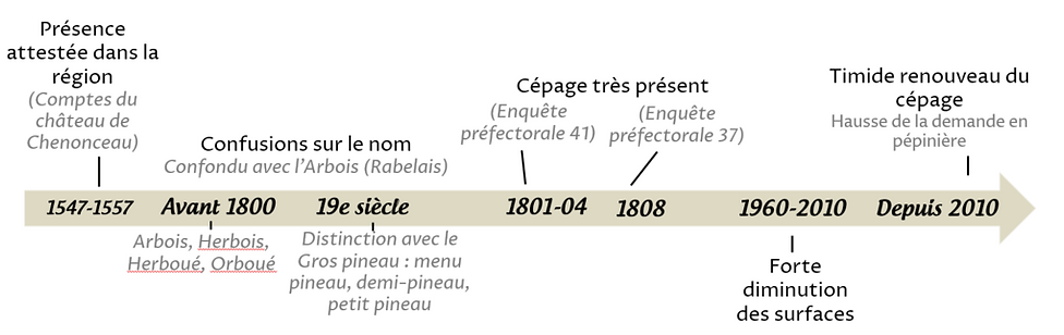 Orbois frise.PNG