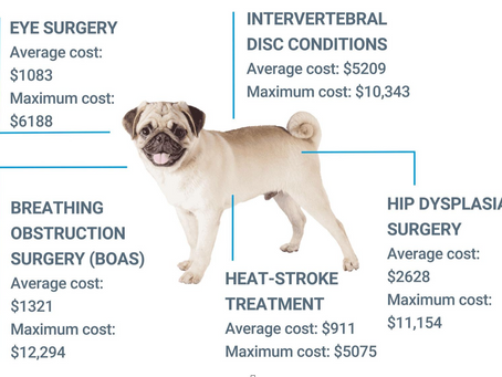 Frenchie Pet Insurance