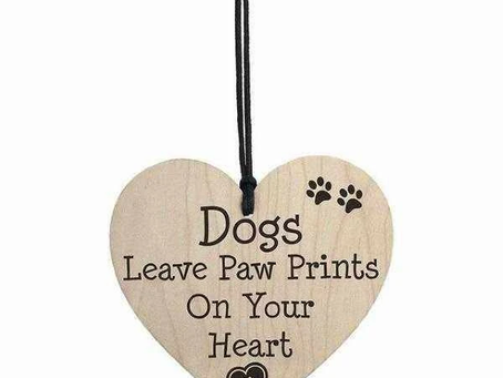 VALENTINES DAY - HOW TO KNOW IF YOUR DOG REALLY LOVES YOU?