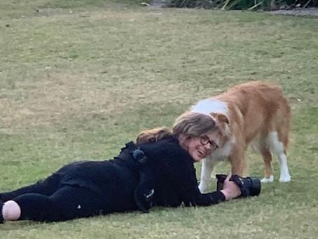 Pawrents DIY Dog Photography Tips