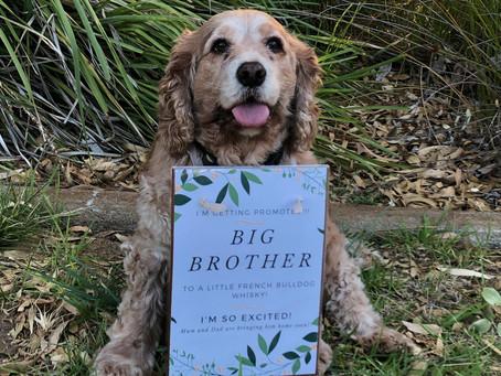 Cebar's Promotion to Big Bro!