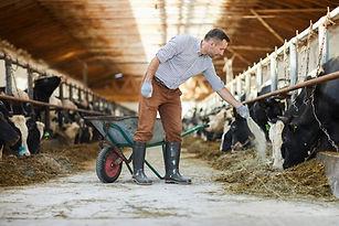 animal feed.jpg