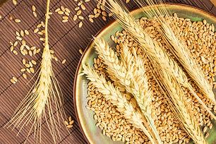 durum wheat.jpg