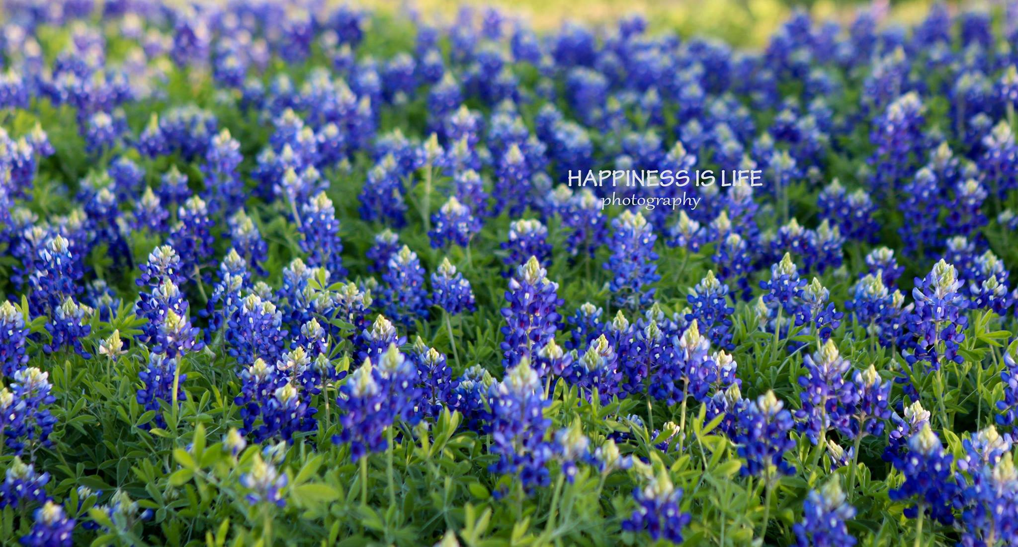 Copyright Happiness is Life Photo