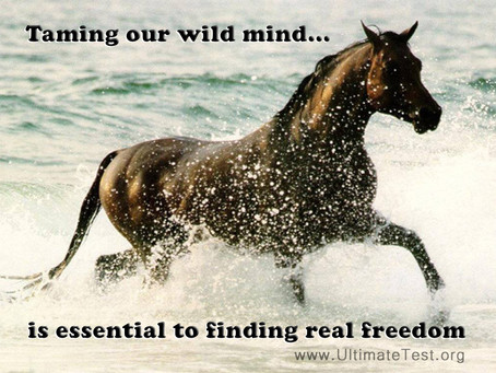 Taming our wild mind...