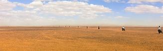 desert ride.png