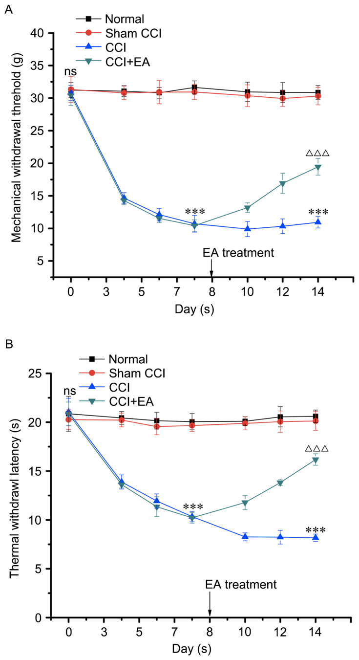 Figure 2. Treatment with EA resulted in a significant analgesic effect. (A) Mechanical allodynia. (B) Thermal hyperalgesia. The graph demonstrated the changes in withdrawal threshold from the baseline. The threshold was observed before (Pre) and following EA. MWT and TWL were significantly reduced from the baseline on day 3 following the CCI operation. MWT and TWL of rats treated with EA were significantly higher than the CCI group on the days indicated. ***P<0.001 vs. sham group; ΔΔΔP<0.001 vs. CCI group. CCI, chronic constriction injury; EA, electro‑acupuncture.