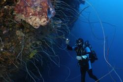 Small Hope Bay - Dive wall