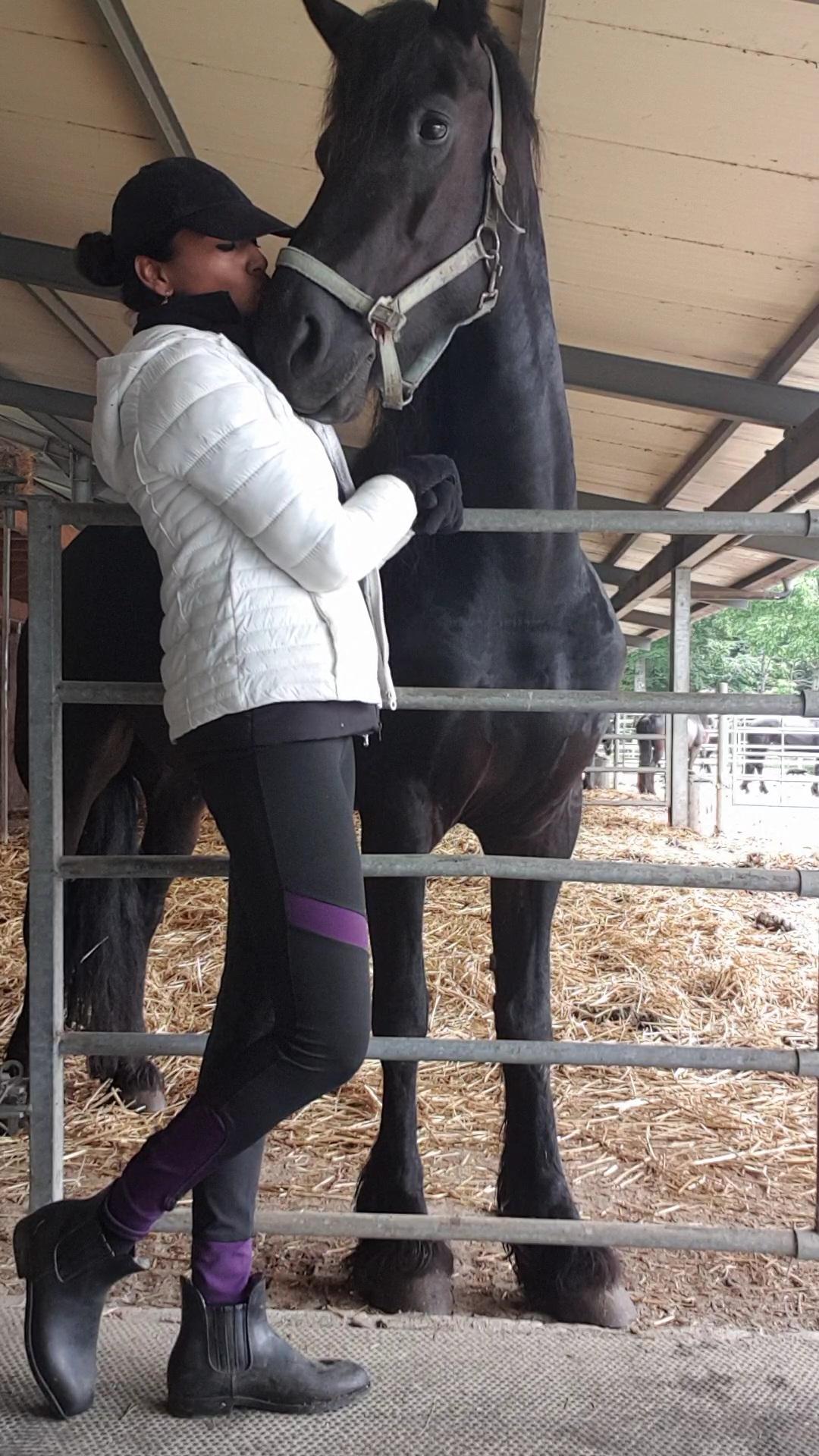Young non-ridden Friesian Horse