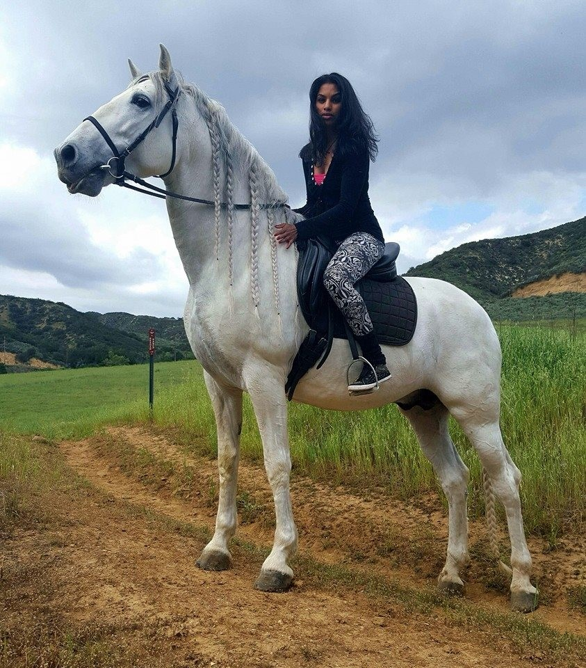 Andalusian Stallion, California