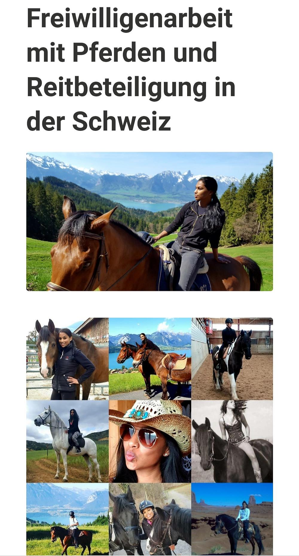 Pferde Volunteer