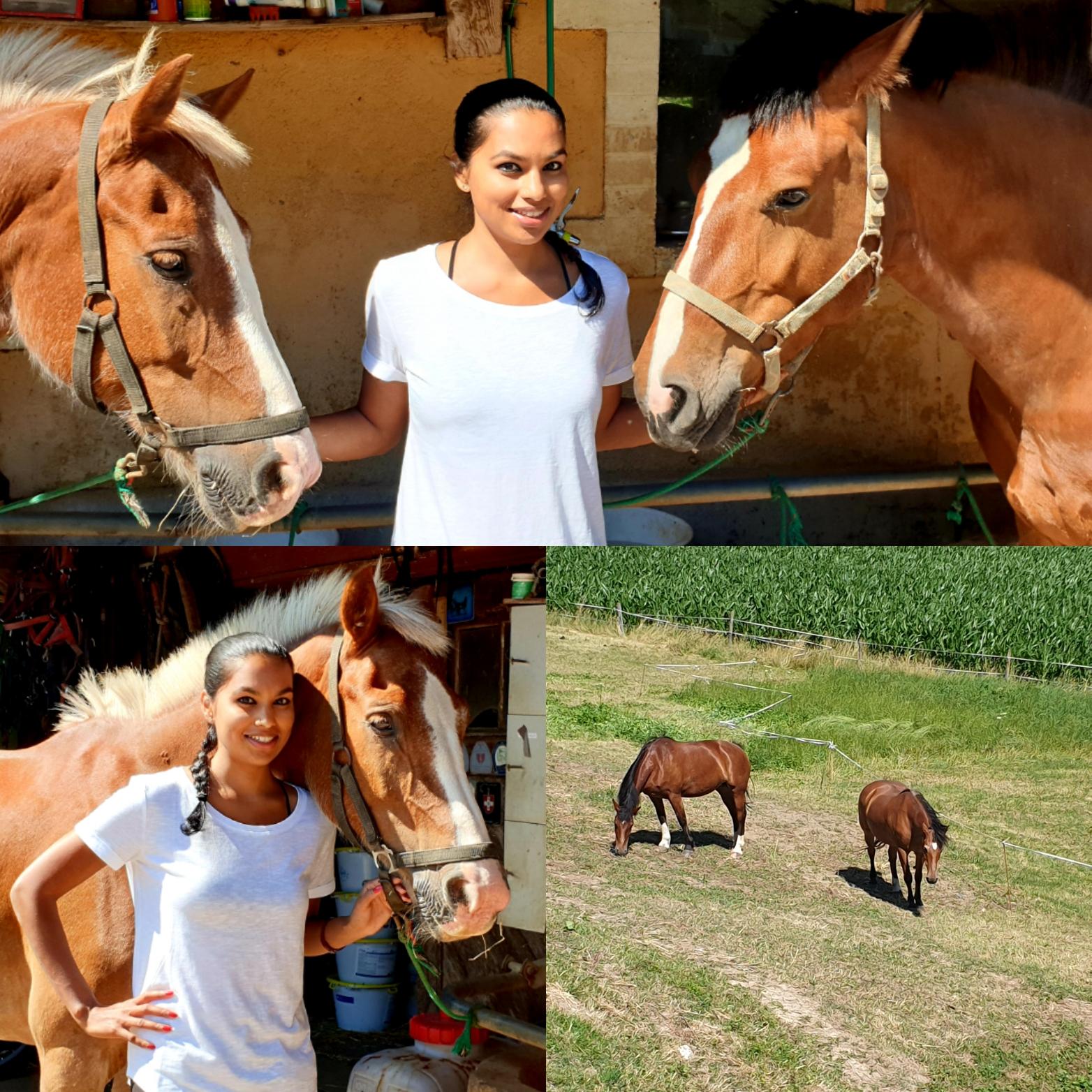 Franches-Montagnes Horse