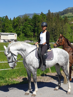 German Sale Horses