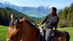 Swiss Jumper Horse