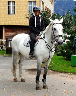 Polish Warmblood Horse