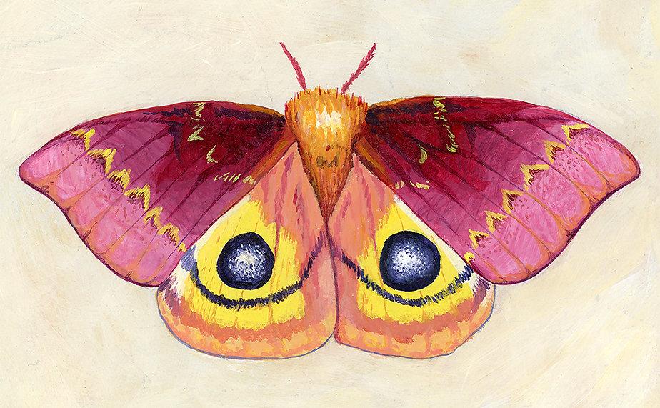 io moth promo.jpg