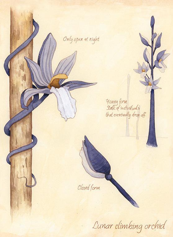 lunar orchid promo.jpg