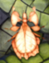 Leaf insect promo unmarked.jpg
