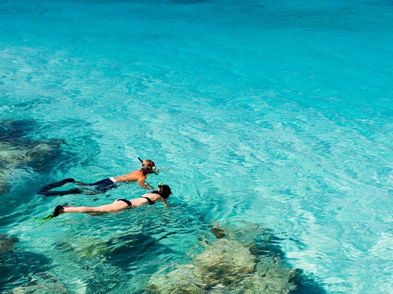 Seek The Coral Reef