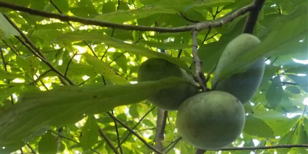 Pawpaw Gathering at Long Branch Farm and Trails