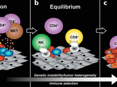A seleção natural ensinou células tumorais a escapar do sistema imunológico