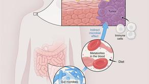 A microbiota humana e sua relação com o desenvolvimento de tumores