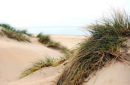 Dunes Texel.jpg