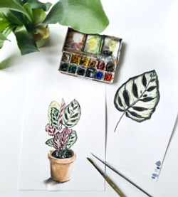 Botanical Watercolours
