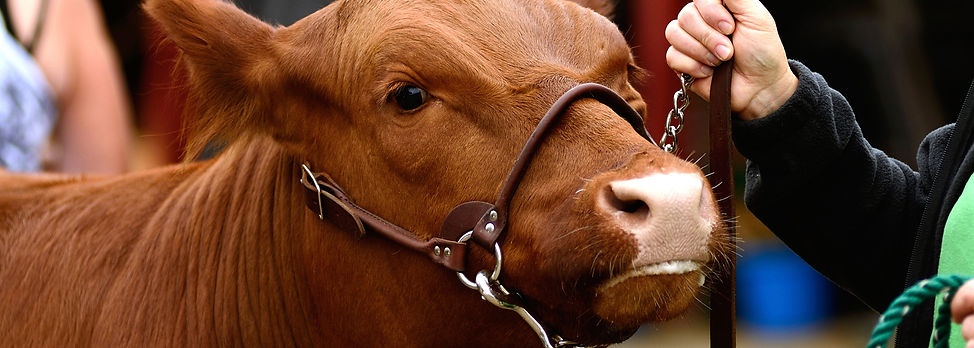 livestock-judging.jpg