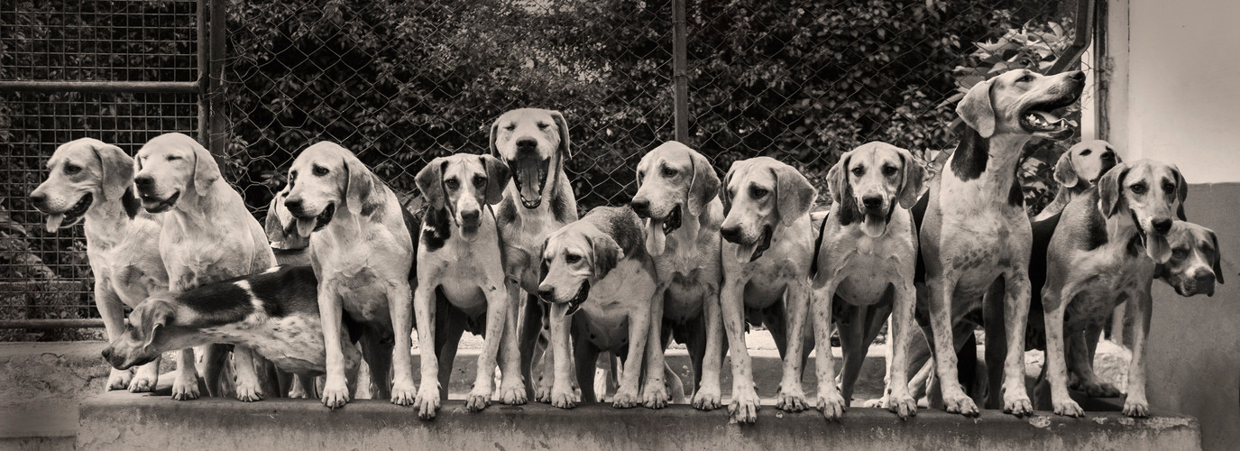 Hounds #expressions