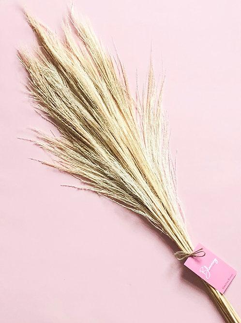Dried Fluffy Broom Grass Bunch