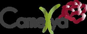 Camellya_Logo_Vectorisé_couleur_2019.png