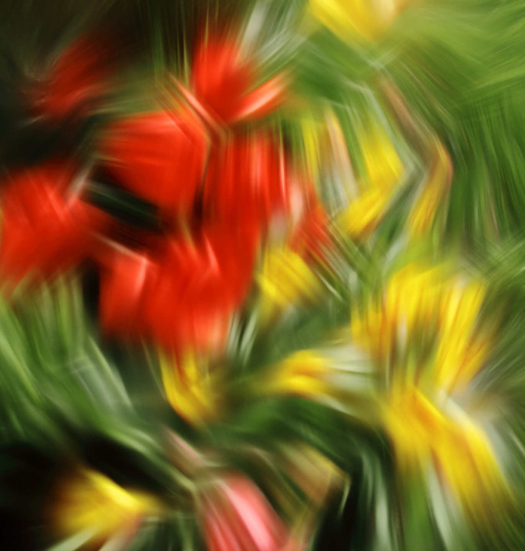 Garden 3 by Temel Nal
