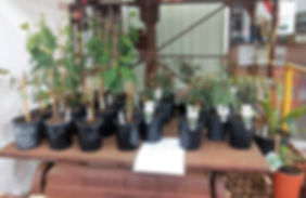 hicksplants_edited.jpg