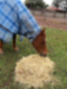 hickshorse.jpg