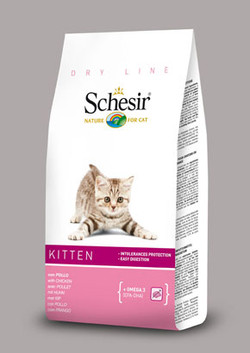 Schesir kitten