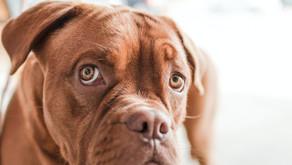 Hundesprache – Was will mein Hund mir sagen?