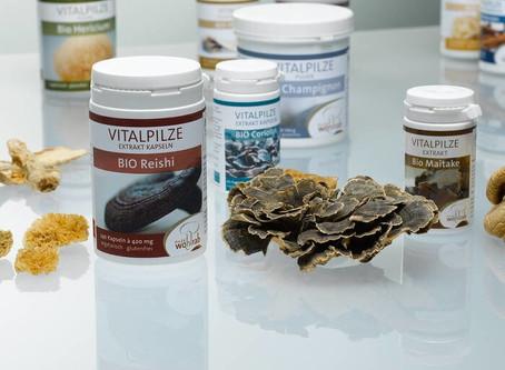 Vitalpilze: Mykotherapie für Tiere