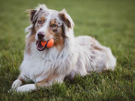 Hundetraining richtig gemacht! So finden Sie den richtigen Hundetrainer/die richtige Hundetrainerin!