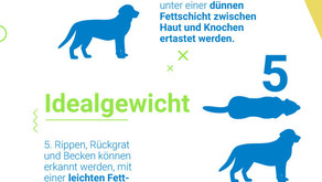 Übergewicht bei Hunden
