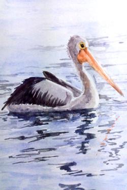 ross-pelican
