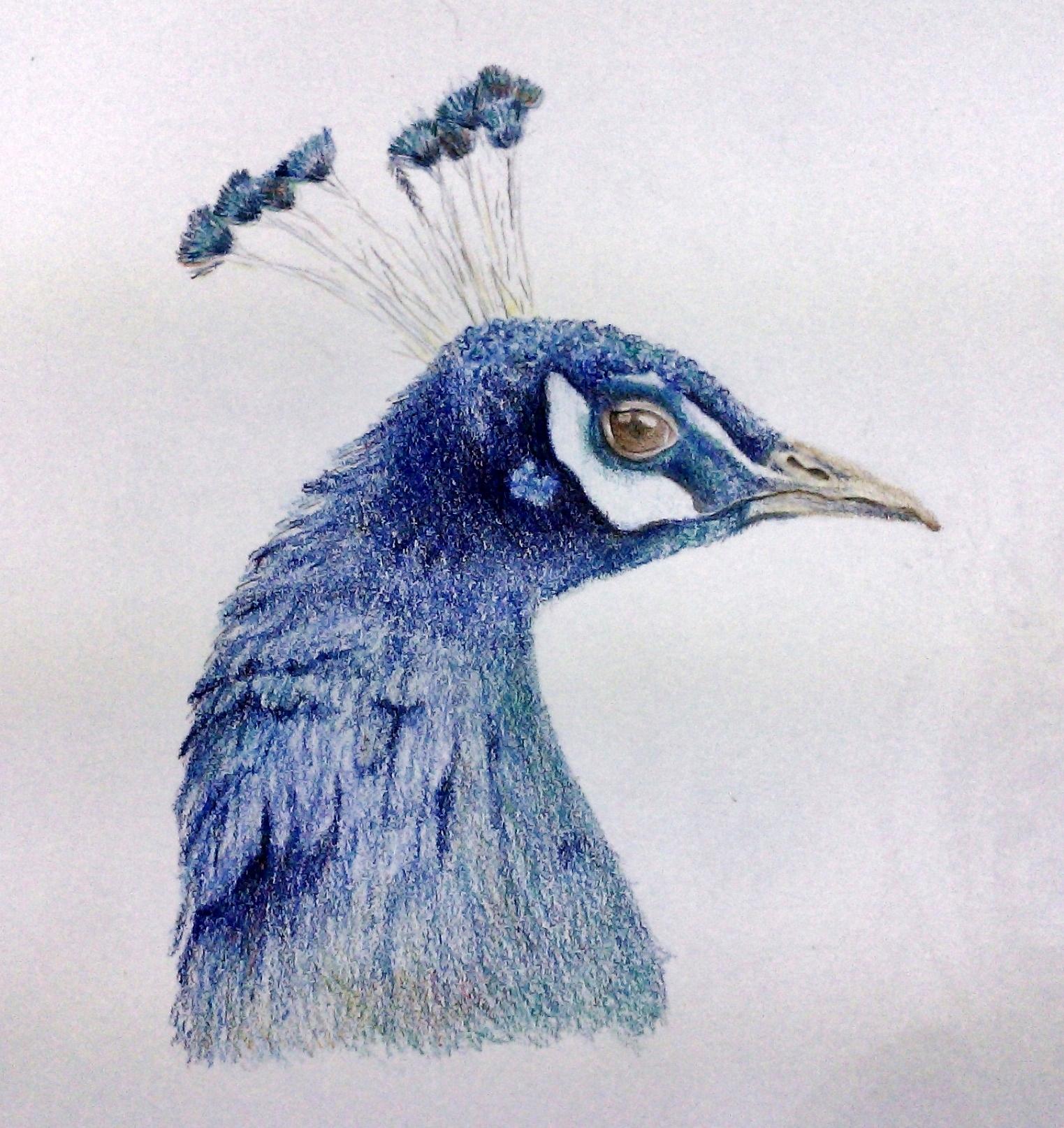 sonya-peacock