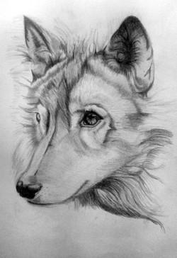 rhonda-husky