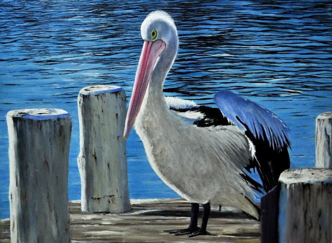 rose-pelican