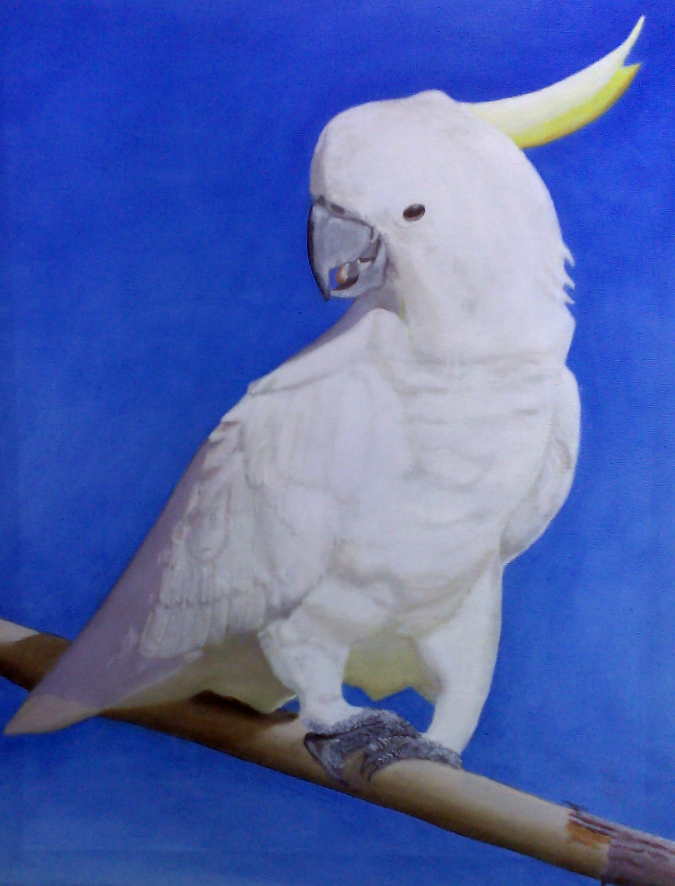 doug-cocky