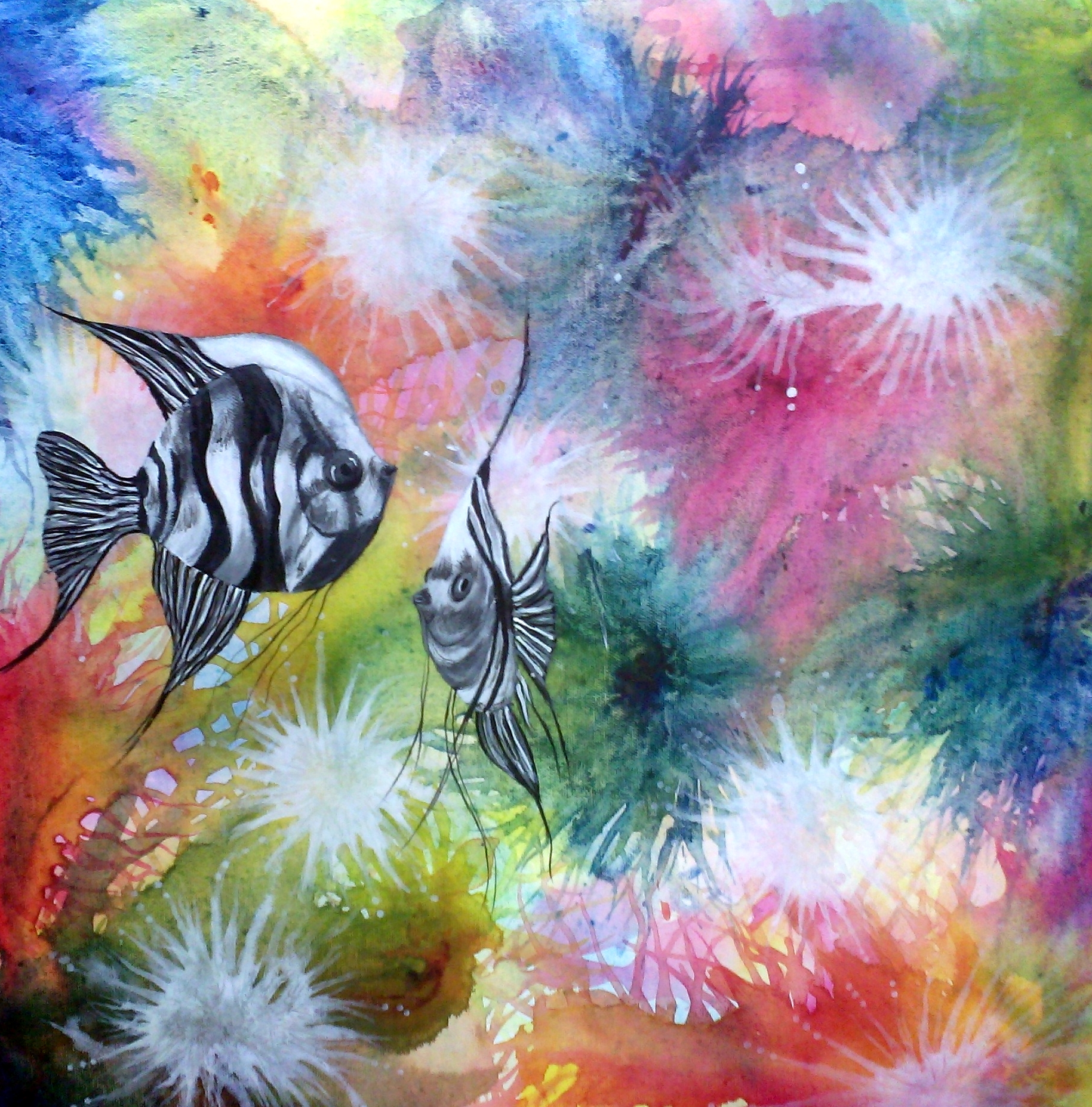 dib-fish
