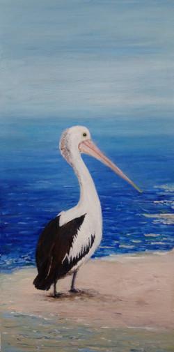 pat-culham-pelican-june2021