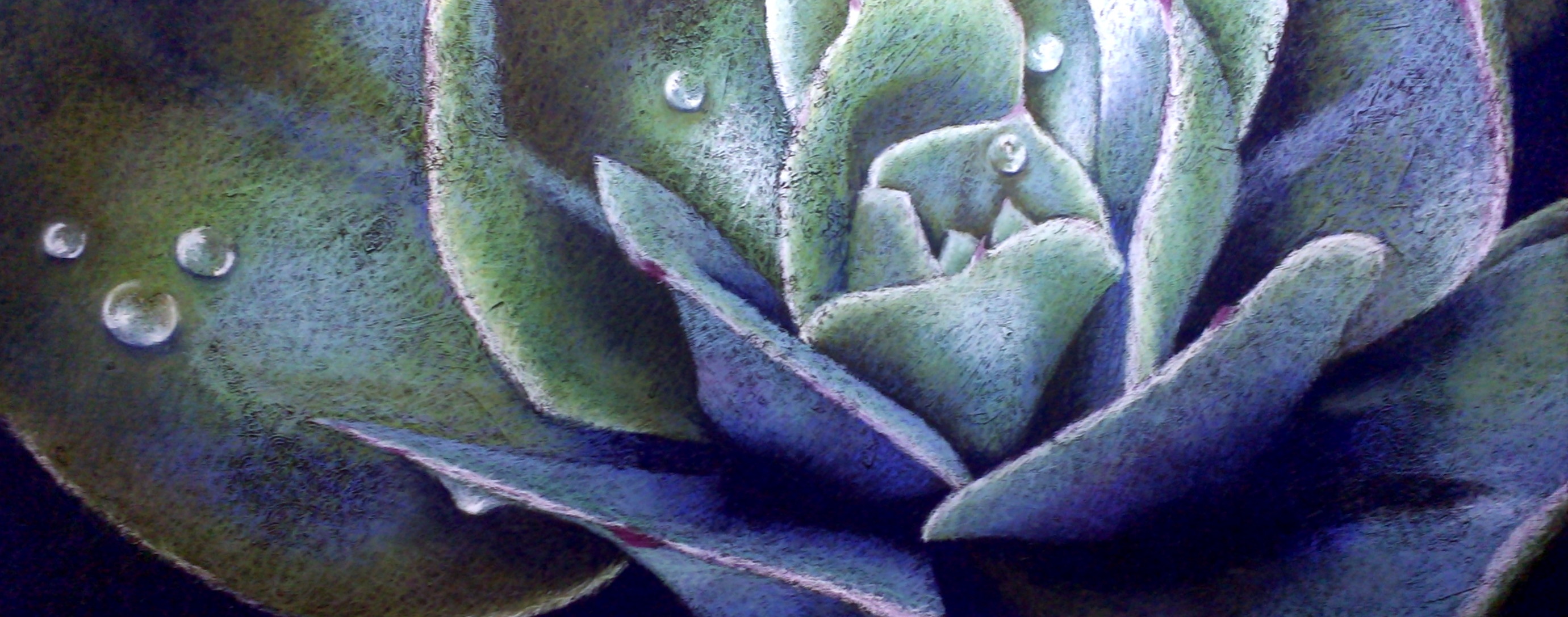 peta-cactus